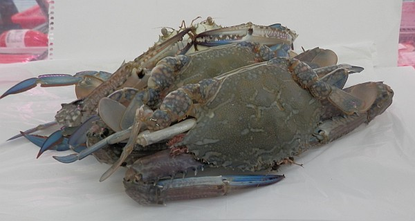 Blue Swimmer Crabs
