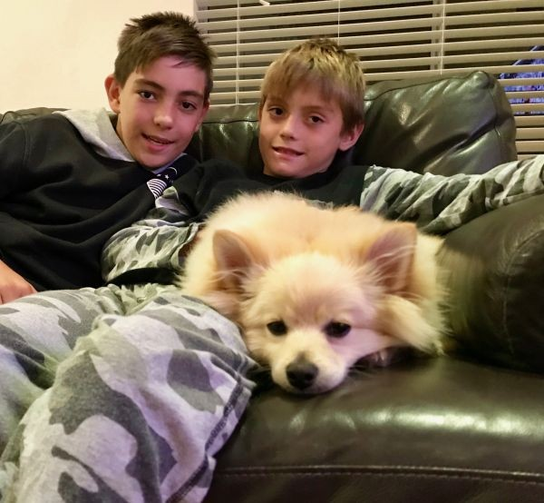 Max the Pomeranian and the boys