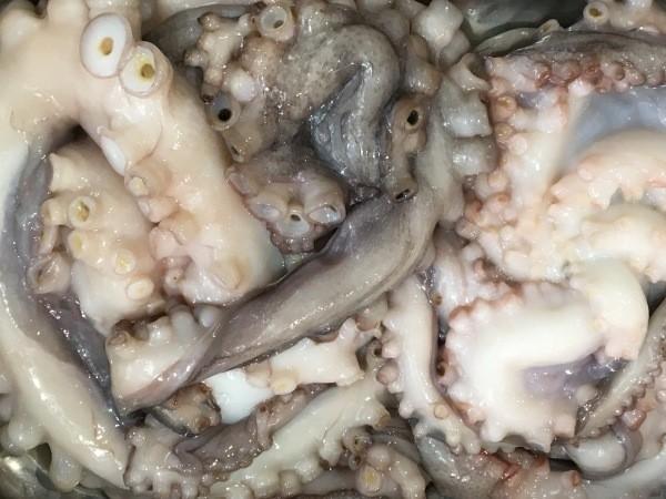 Australian Octopus
