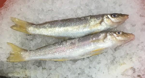 West Australian Yellowfin Whiting July 18 2020
