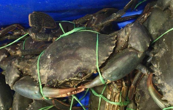 NT Mud Crabs